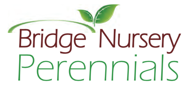 Bridge Nursery