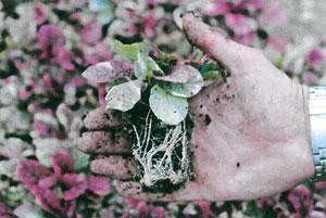 1 litre plants