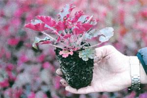 3 litre plants