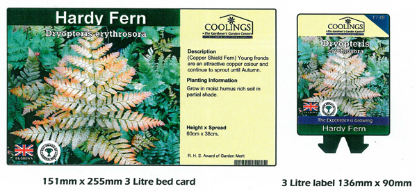 3 Litre Bed Card Example